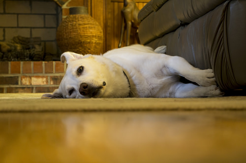 photo credit: Tired Puppy via photopin (license)
