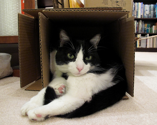photo credit: Oliver in a Too-Small Box via photopin (license)